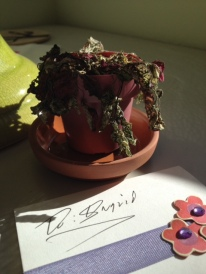 "Color photo of an utterly wilted miniature potted plant with a handwritten gift card reading ""To: Ingrid"" in front of it."